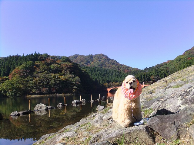 yokokawa