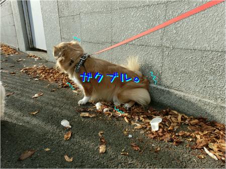 お花見2013-6
