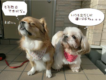 お花見2013-2