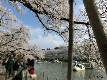 お花見2013-9