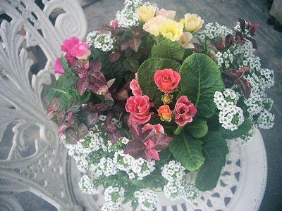 IMGP6039_20131125103202db4.jpg