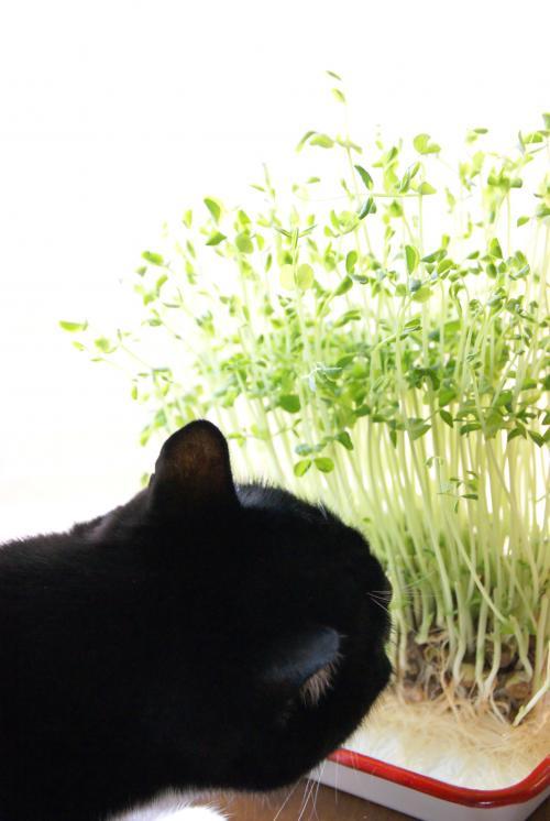 蘭丸匂いを愛でる