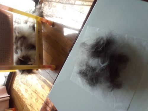 猫の毛どっさり