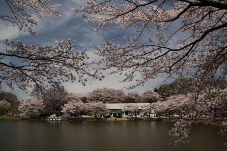鹿沼錦鯉公園