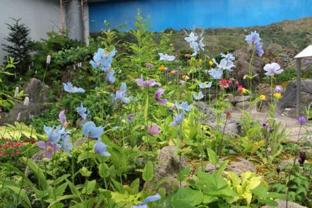 高山植物館