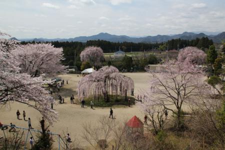 孝子桜まつり