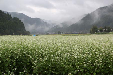 永野のソバ畑