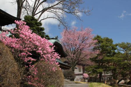 奥日光の春