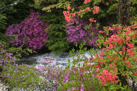 竜頭の滝の初夏