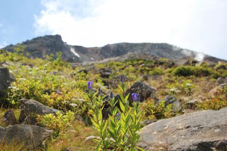 茶臼岳周辺の花