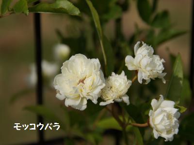 2_20120527162114.jpg