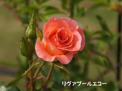 3_20120527162113.jpg