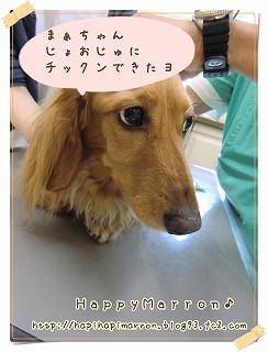 混合ワクチン3