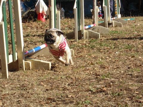DSCN0719 犬の運動場