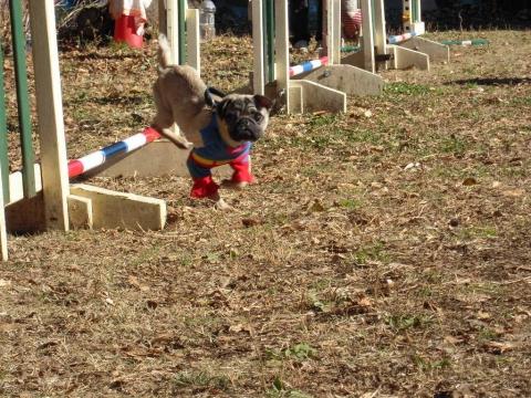 DSCN0718 犬の運動場