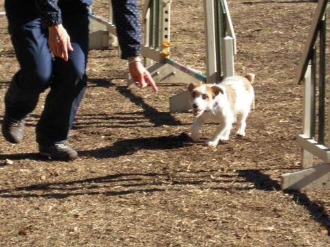 DSCN0713 犬の運動場