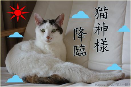猫神様降臨