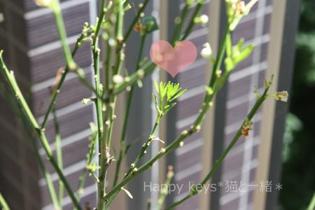 金柑の木新たな芽