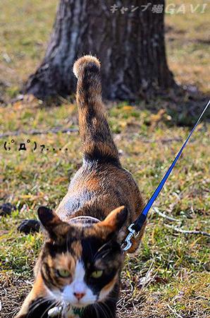 だんだんイカ耳Gaviちゃん3