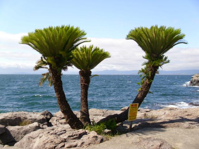 長崎県の内海の岬