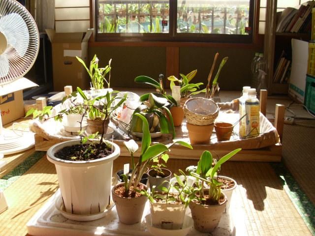 自分の部屋で植物を日向ぼっこ