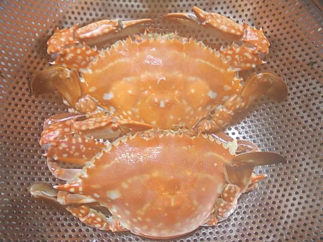 Gazami crab 20130630-2