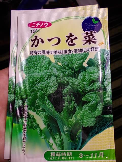 Katsuona spinach 20121027