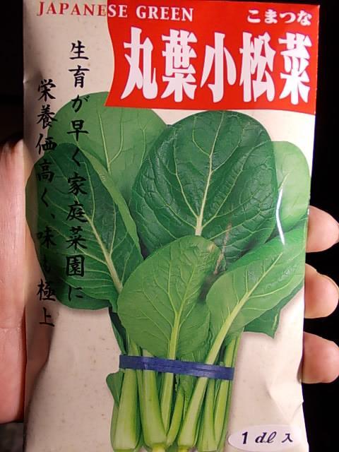 Komatsuna spinach 20121213