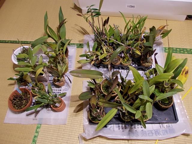 Orchids 20121204