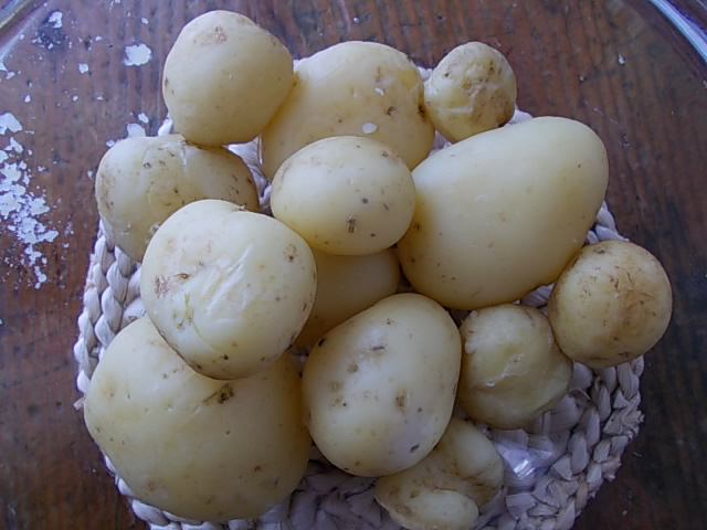 Potato 'Tokachi Kogane' 20130612