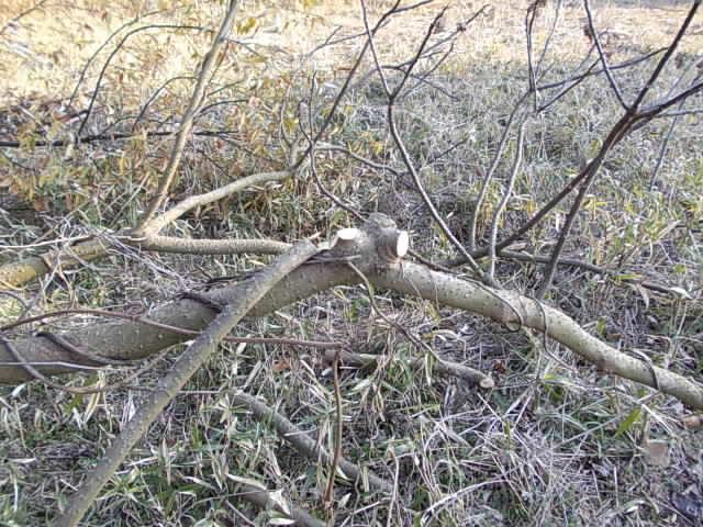 Tree 20130112-2