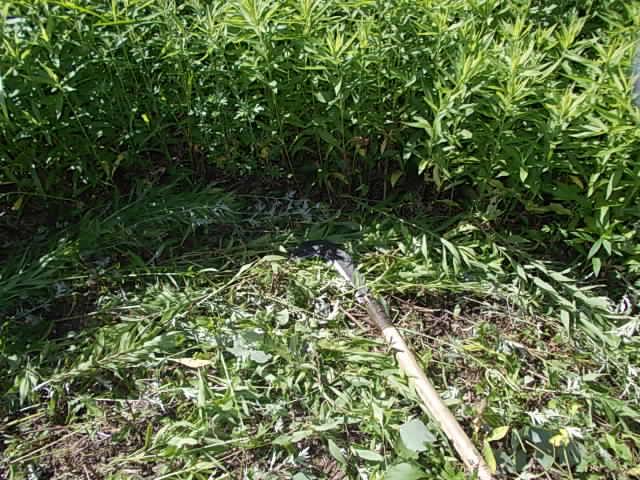weed20120820