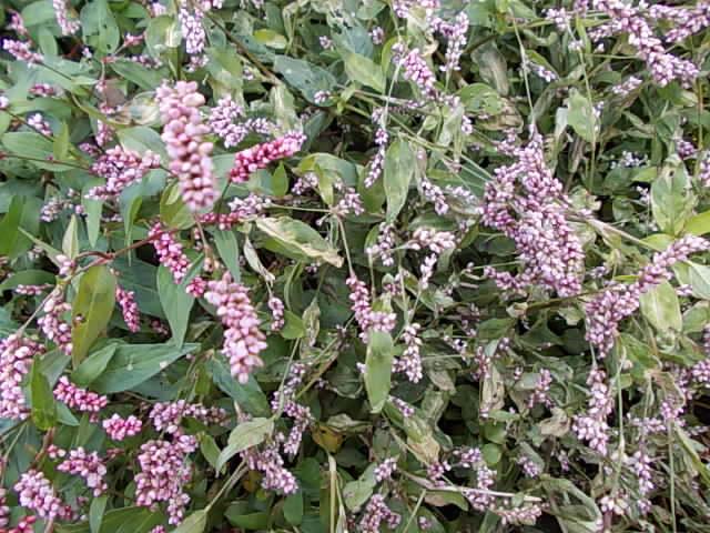 Herbicide Zaxa 20121106