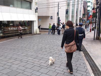 2012-11-03+blog10_convert_20121118144147.jpg