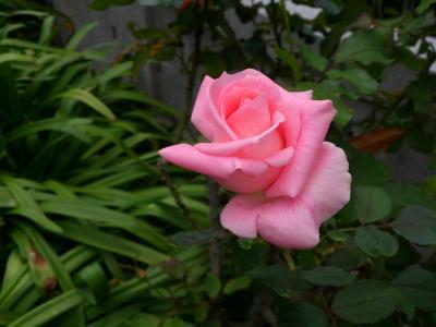2012-11-03+blog2_convert_20121118143558.jpg