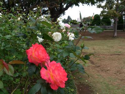 2012-11-03+blog3_convert_20121118143640.jpg