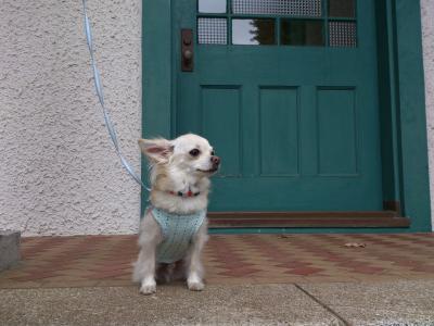 2012-11-03+blog6_convert_20121118143850.jpg
