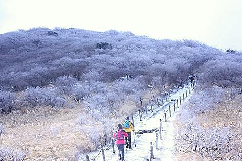木々が白くなってきた♪