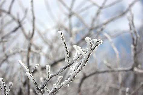 小さな樹氷♪