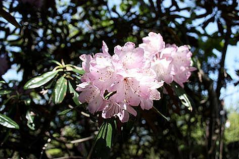 犬ヶ岳の花でした♪