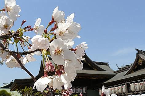 桜の頃でした♪