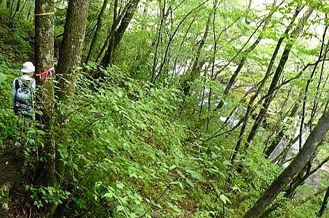 森林を進み♪