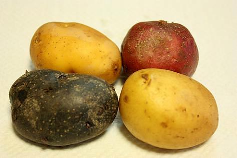 4種類のじゃが芋♪