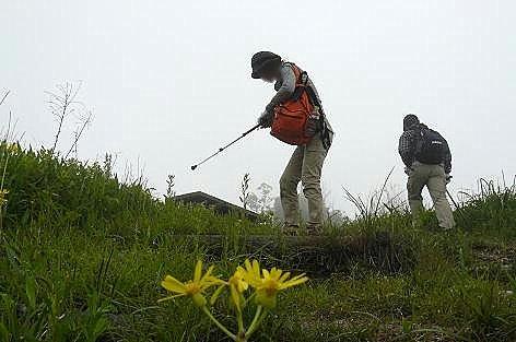 オカオグルマの咲く丘♪