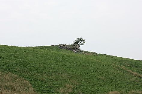 ライオン岩?