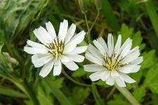 白いお花が可愛い♪