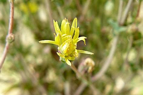 黄色い小さな花♪