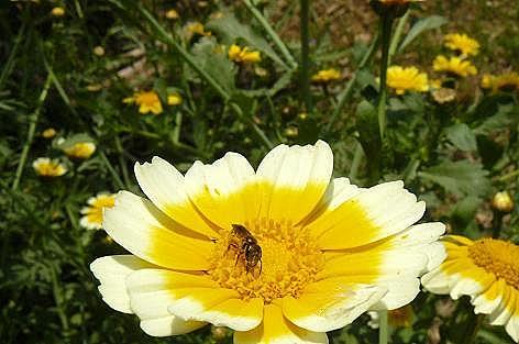 白と黄色♪