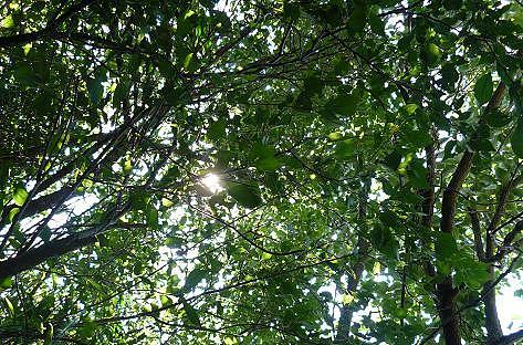 梅と柿の木♪