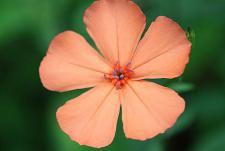可愛い花でした♪